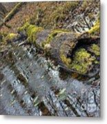 Ye Olde Mossy Log Metal Print