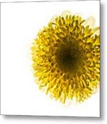 Yellow Metal Print by Amr Miqdadi