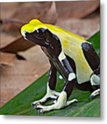 Yellow And Black Poison Dart Frog Metal Print