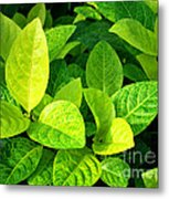 Yellow And Green Leaves Metal Print