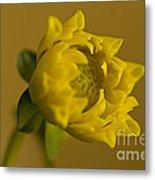 Yellow And Green Metal Print