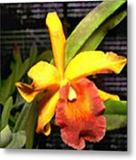 Yellow And Orange Cattleya In The Hothouse Metal Print