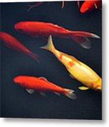 Yellow And Orange Koi Swimming Metal Print