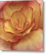 Yellow And Orange Rose Metal Print