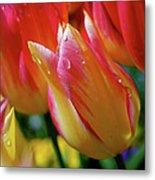 Yellow And Pink Tulips Metal Print
