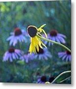 Yellow  And Purple Coneflowers Metal Print