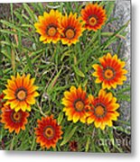 Yellow And Red Daisy Flower Metal Print