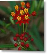 Yellow And Red Flowers Metal Print