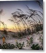 Yellow And Red Flowers On The Beach Metal Print