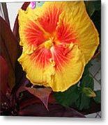 Yellow And Red Hibiscus Metal Print