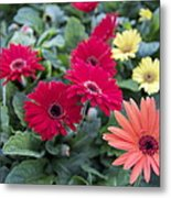 Yellow And Red Metal Print by Jocelyne Choquette