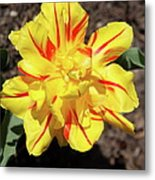 Yellow And Red Tulip Metal Print