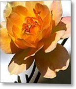 Yellow And White Rose Metal Print