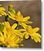 Yellow Arfaj Flowers Metal Print