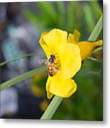 Yellow Bell Flower With Honeybee Metal Print