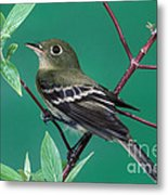 Yellow-bellied Flycatcher Metal Print