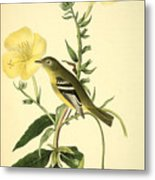 Yellow-bellied Flycatcher Metal Print by Philip Ralley