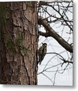 Yellow Bellied Sapsucker In The Pine Metal Print