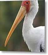 Yellow-billed Stork Metal Print
