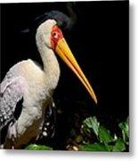 Yellow Billed Stork Peers At Camera Metal Print