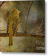 Yellow Bird Resting Metal Print by Pam Vick