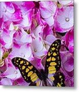 Yellow Black Butterfly On Hydrangea Metal Print