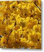 Yellow Blossoms Of A Tabebuia Tree Metal Print