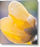 yellow buttercup flower II Metal Print