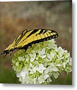 Yellow Butterfly 2 Metal Print