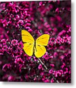 Yellow Butterfly On Red Flowering Bush Metal Print