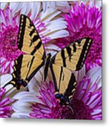Yellow Butterfly Resting Metal Print