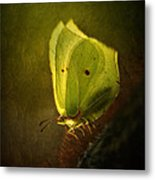 Yellow Butterfly Sitting On The Moss  Metal Print