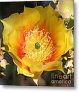 Yellow Cactus Flower Square Metal Print