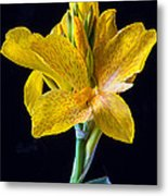 Yellow Canna Flower Metal Print