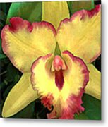 Yellow Cattleya With Red Ruffles Metal Print
