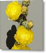Yellow Cactus Flowers Metal Print