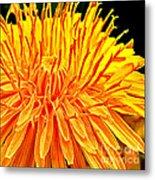 Yellow Chrysanthemum Painting Metal Print