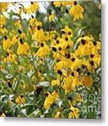 Yellow Cone Flowers Metal Print