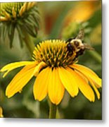 Yellow Coneflower And Bee Metal Print