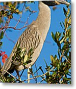 Yellow Crown Night Heron Metal Print