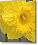 Yellow Daffodil Floral Metal Print