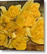 Yellow Daffodils And Texture Metal Print