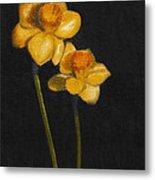 Yellow Daffodils Metal Print