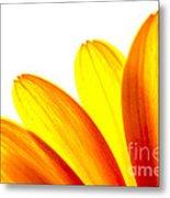 Yellow Daisy Petals Macro Metal Print