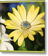 Yellow Daisy With Boarder Metal Print