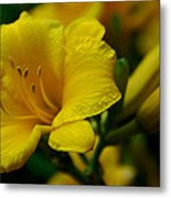 One Day Lily  Metal Print