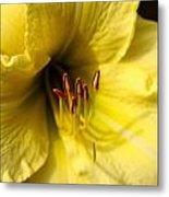 Grace Yellow Day Lily Art Metal Print
