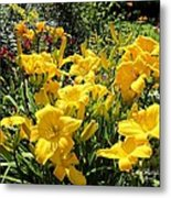 Yellow Daylilies Metal Print