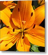 Yellow Delight Metal Print