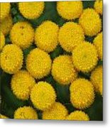 Yellow Dots Metal Print